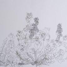 Dandelions and Dead-nettle