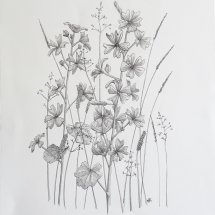 Mallow and Grasses