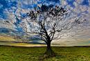 Lone tree, bright sky