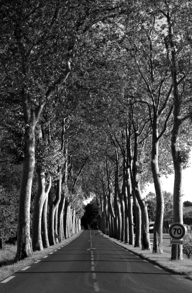 Tree Lined Road, France
