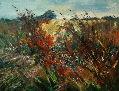 WILDFLOWERS ON THE  HEADLAND