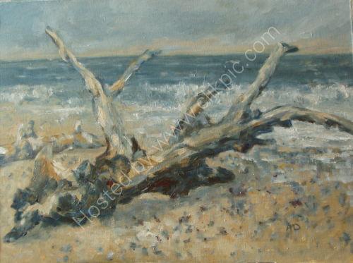 PETRIFIED TREE SURVIVING ON THE BEACH