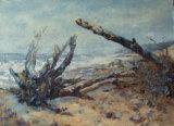 TREES REMAINING ON THE BEACH, E-UK