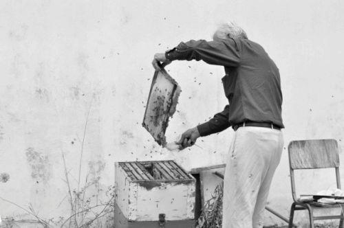 Beekeeper, Athens
