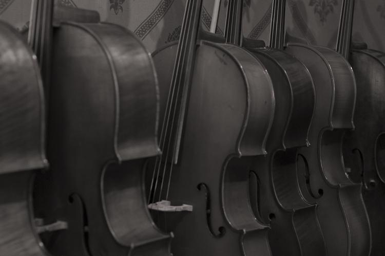 The Violineri 17