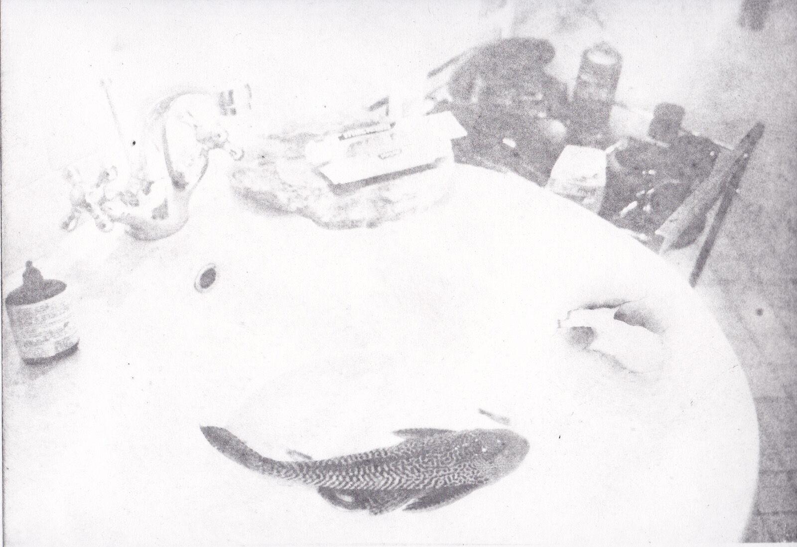 Basin Fish