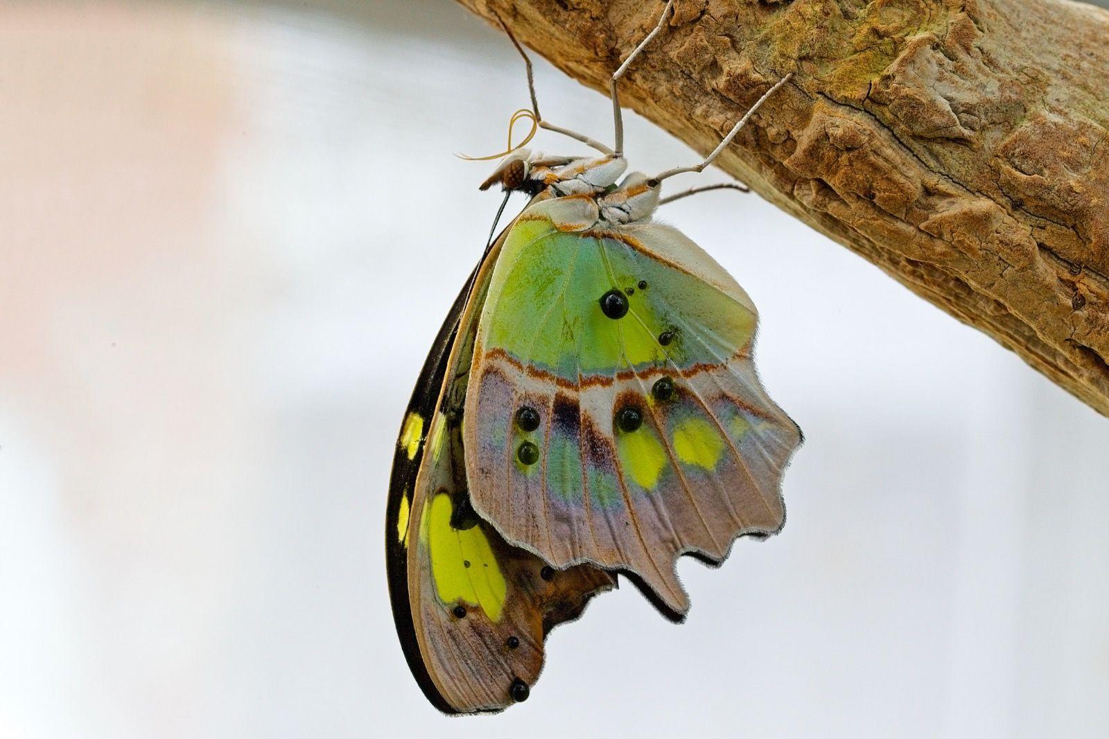 The Malachite Stratford Butterfly Farm