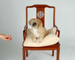 Pet Photography, The Ditchling Studio, nr Lewes, Sussex