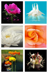 6 Assorted Flower Cards