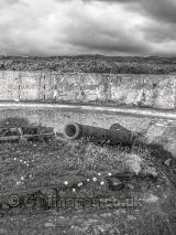 Daisies at the Cannon Site from WW2 B&W