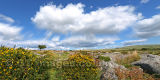 Windswept Dartmoor Panoramic