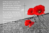Flanders Fields with Poppies