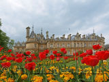 Tulip Time at Waddesdon Manor