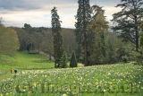 Springtime at Waddesdon Manor
