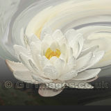 Water Lily Whirlpool Square