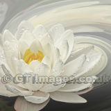 Water Lily Whirlpool (Square)