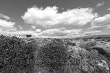 Windswept Dartmoor B&W