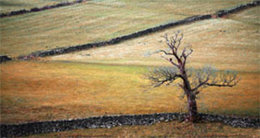 Dales Tree