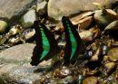 Butterfly Beach, Tangkahan, Sumatra