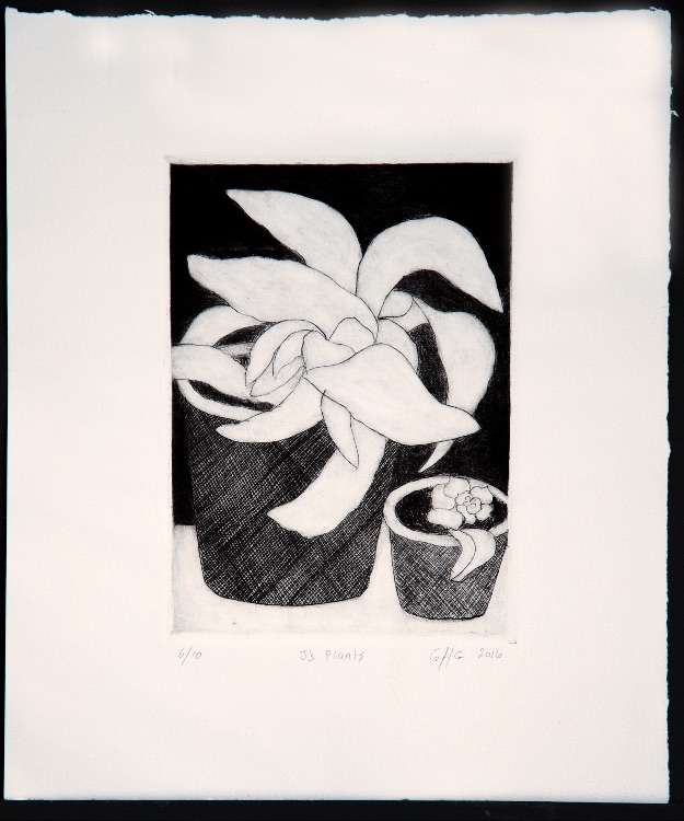J's Plants, drypoint, 20 x 14 cms, 2016, edition of 10