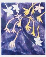 Nicotiana, Night, woodcut, 36 x 30 cms., 2014, edition of 6
