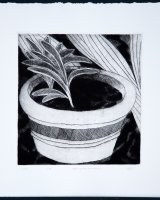 Young Agapanthus, drypoint, 21.5 x 19.5 cms, 2016, edition of 10