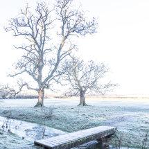 Kemble Frost