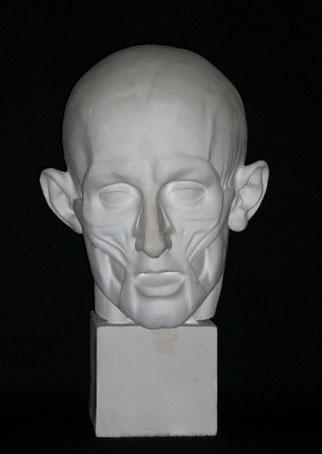 A087 Testa anatomica Houdon