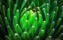 Colourful Cactus