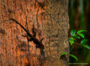 Ubiquitous Gecko