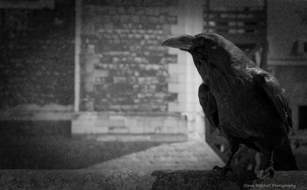 And the raven, never flitting, still is sitting, still is sitting...