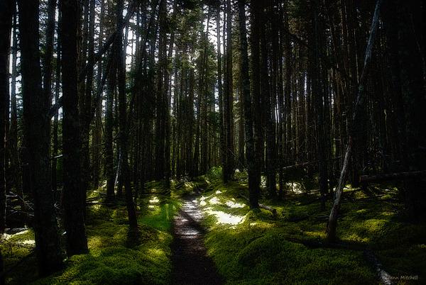 Terra Nova Trail