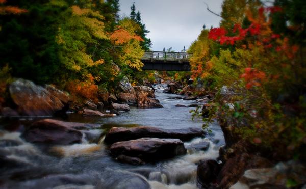 Fall - Terra Nova River