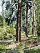 Cragside Forest Rothbury