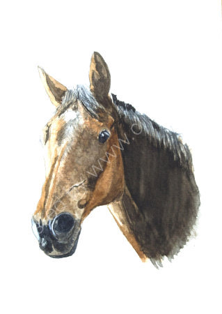 Roan Horse