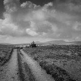 shepherd, the northern fells
