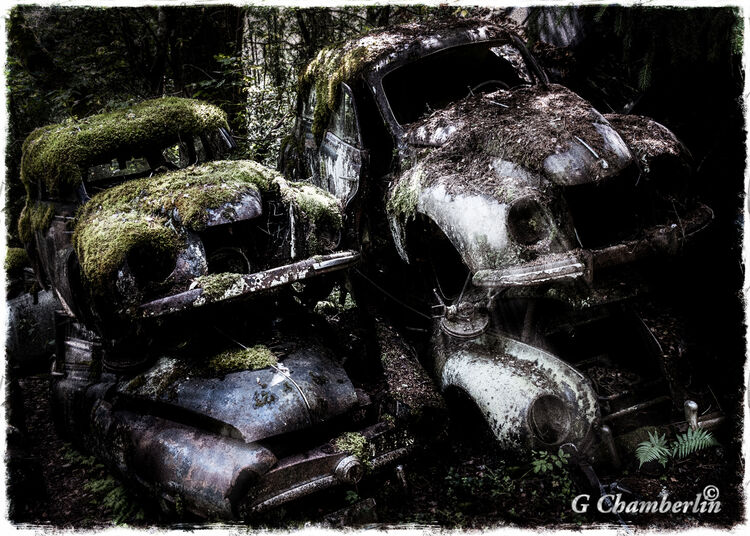 Cars In The Forest 1