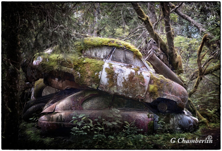 Cars In The Forest 2