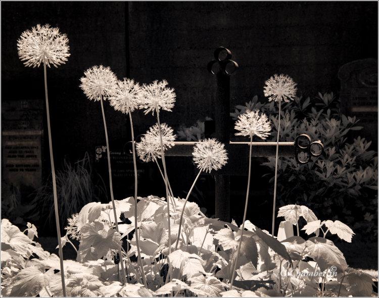 IR Flowers