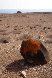 Fuerteventura Orange Moss