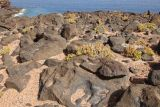 Fuerteventura Rocks & Plants