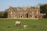 Launde Abbey Sheep