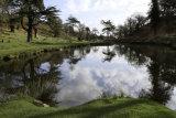 Bradgate Park Pond