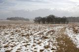 Bradgate Park Snow