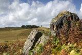 Bradgate Park Stone