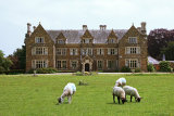 Launde Abbey Lambs