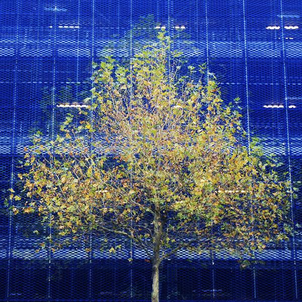 Car Park Tree
