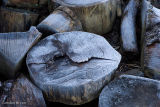 Frosted Logs
