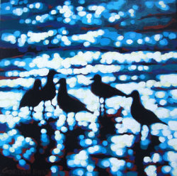 A squabble of seagulls