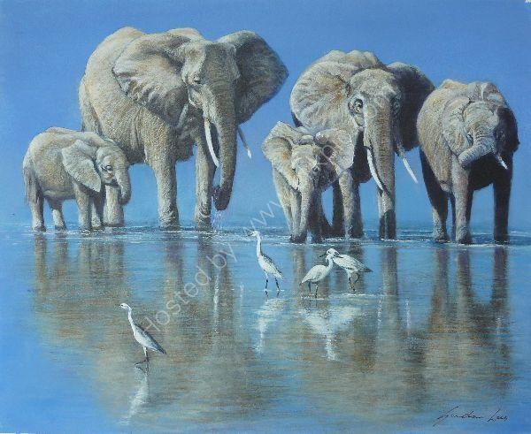 Elephants & Egrets